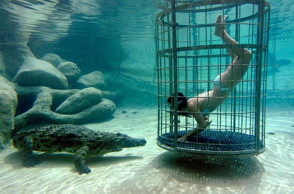 Go cage diving with Crocodiles at the Cango Wildlife Ranch.