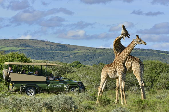Game drive in Shamwari Game Reserve, Eastern Cape.