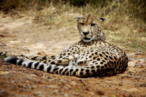 The Eastern Cape is home to the Big Five.