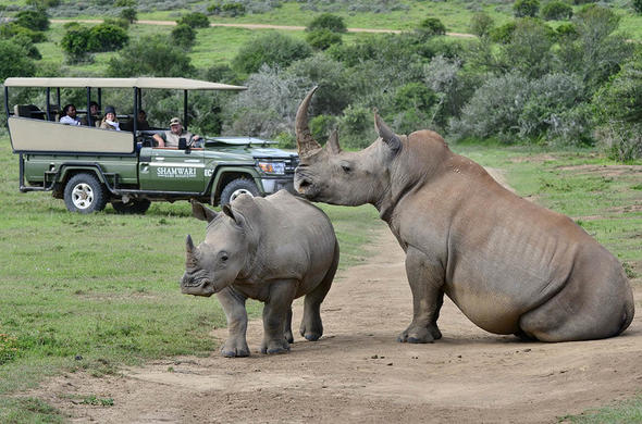 Game drive activity in Shamwari Game Reserve.